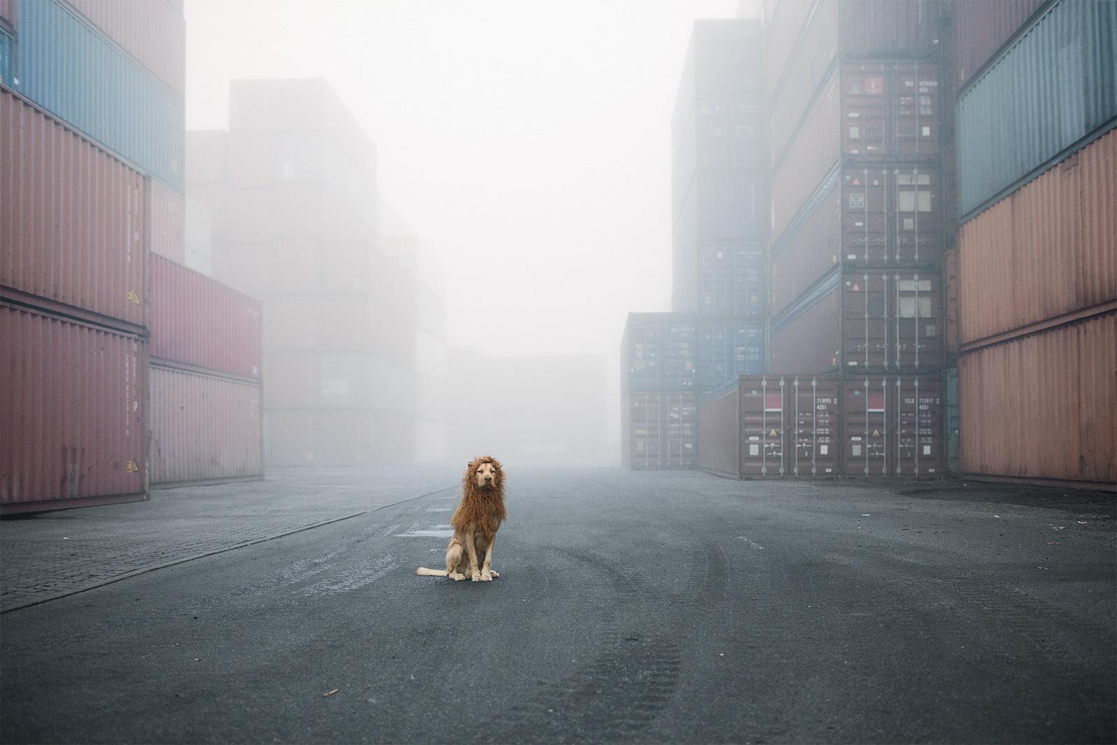 El leon de la ciudad