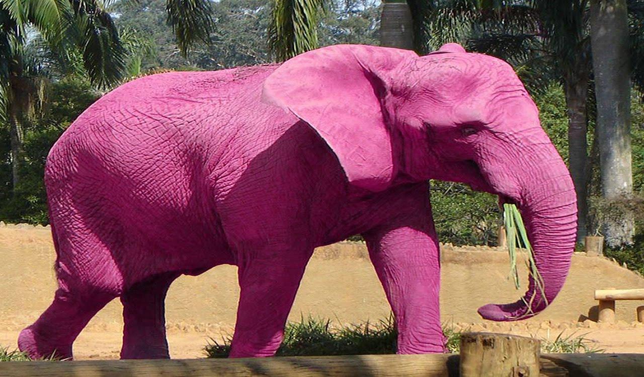 10 animales color rosa que existen en el mundo | La Otra Cara